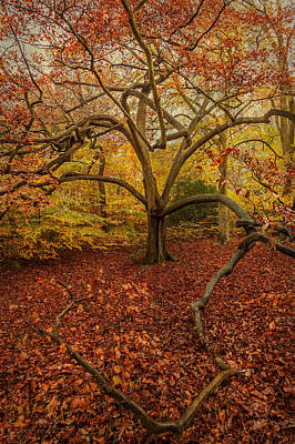Photograph - Autumn Colours by Stuart Gennery