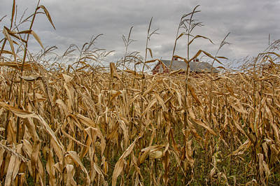 Autumn Corn Field And Barn Art Print by At Lands End Photography