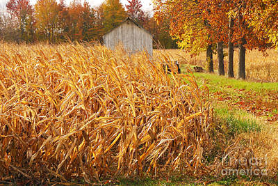 Art Print featuring the photograph Autumn Corn by Mary Carol Story