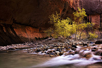 Zion National Park Photograph - Autumn Cottonwood In The Narrows by Andrew Soundarajan