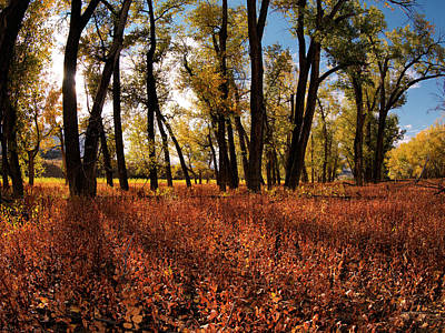 Autumn Cottonwood Sanctuary Art Print by Leland D Howard