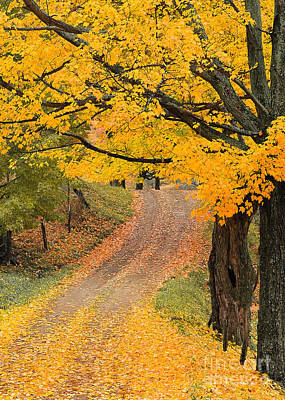Photograph - Autumn Country Road by Alan L Graham