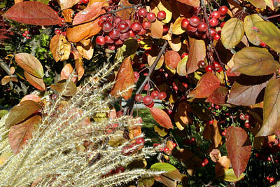 Photograph - Autumn Crabapples And Tall Grass by Gene Walls