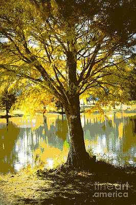Autumn Cypress Reflection Art Print by Carol Groenen
