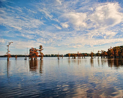 Photograph - Autumn Cypress Trees by Jai Johnson
