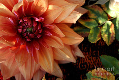 Photograph - Autumn Dahlia Darling by Jeanette French
