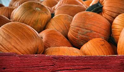 Photograph - Autumn Pumpkins On The Farm by Dan Sproul