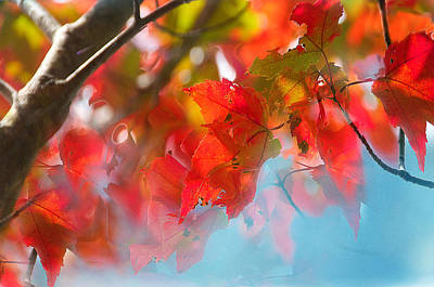 Photograph - Autumn Dance by Sandra Silva