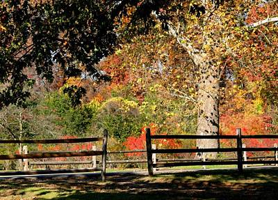 Photograph - Autumn Day by Living Color Photography Lorraine Lynch
