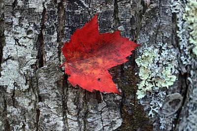 Orsillo Photograph - Autumn Day by Mark Ashkenazi
