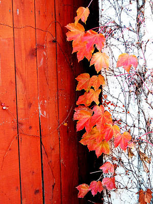 Photograph - Autumn Days by Barbara J Blaisdell