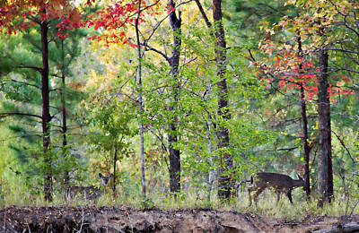 Photograph - Autumn Deer by Lana Trussell