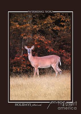 Photograph - Autumn Deer Wildlife Christmas Cards by Jai Johnson