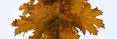 Photograph - Autumn Diptych 01 by Mamoun Sakkal