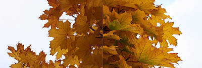 Photograph - Autumn Diptych 02 by Mamoun Sakkal