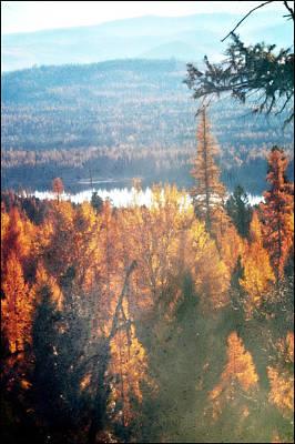 Montana Landscapes Photograph - Autumn Dream by Janie Johnson