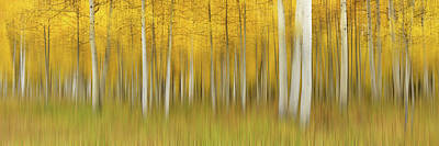 Aspen Wall Art - Photograph - Autumn Dream by Mei Xu