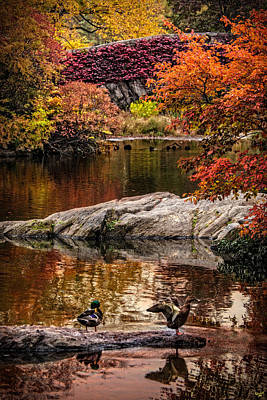 Photograph - Autumn Duck Couple by Chris Lord