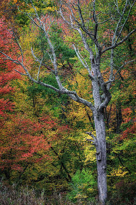 Forest Photograph - Autumn Elder by Bill Wakeley