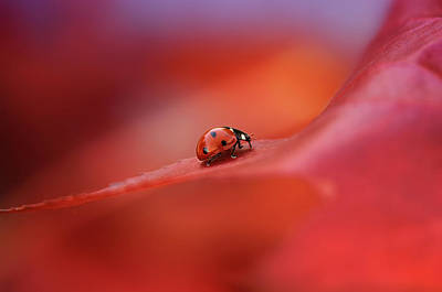Ladybug Wall Art - Photograph - Autumn by Ellen Van Deelen