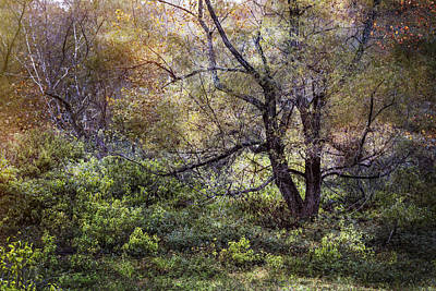 Willows In Fall Photograph - Autumn Enchantment by Debra and Dave Vanderlaan