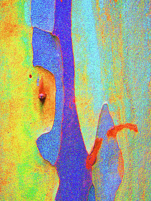 Photograph - Autumn Eucalypt Abstract  by Margaret Saheed