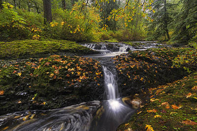 Photograph - Autumn Euphoria  by Mark Kiver