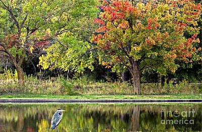 Photograph - Autumn Evening by Elizabeth Winter