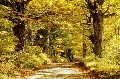 Photograph - Autumn Evening by Gerald Hiam