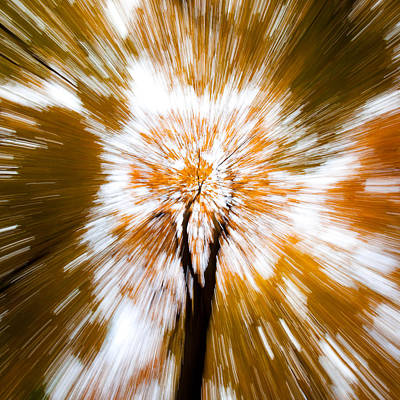 Autumn Scene Photograph - Autumn Explosion by Dave Bowman