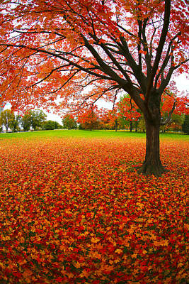 Photograph - Autumn Expressions by Mitch Cat