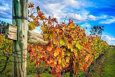 Autumn Falls At The Winery Art Print by Peta Thames
