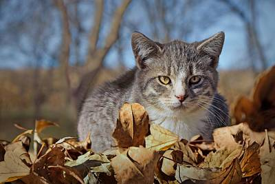 Photograph - Autumn Farm Cat 1 by Nikolyn McDonald