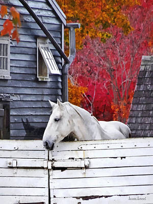 Photograph - Autumn Farm With White Horse by Susan Savad