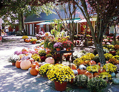 Photograph - Autumn Farmers Market by Karen Francis