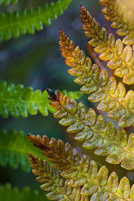 Photograph - Autumn Ferns by Dale Kincaid