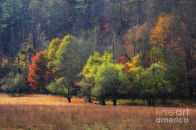 Photograph - Autumn Field by Jill Lang