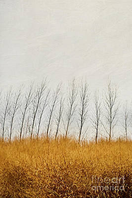 Photograph - Autumn Field Of Tall Grass/digital Painting by Sandra Cunningham