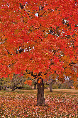 Photograph - Autumn Fire by Allen Beatty