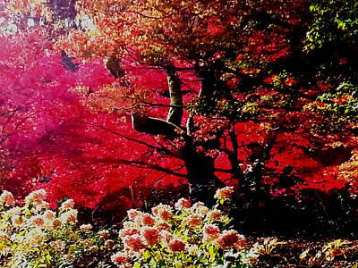 Photograph - Autumn Fire by Nikki Dalton