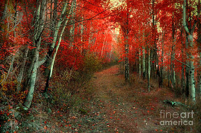 Photograph - Autumn Fire by Tara Turner