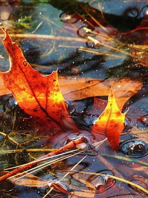 Photograph - Autumn Fire by Todd Sherlock