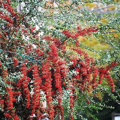 Florals Photograph - Autumn Fireworks by Penni D'Aulerio