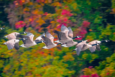 Autumn Flight Art Print by Brian Stevens
