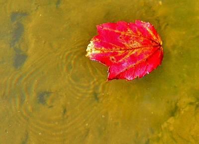 Autumn Floats Art Print