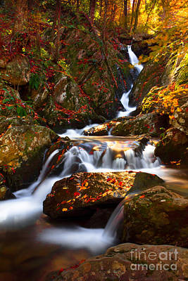Photograph - Autumn Flow by Everett Houser