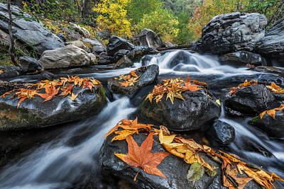 Creek Photograph - Autumn Flow by Guy Schmickle