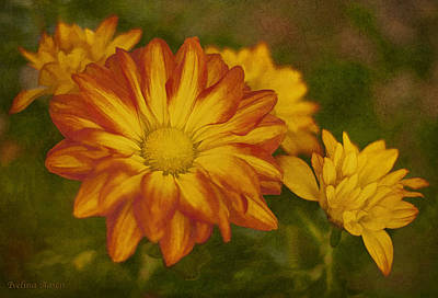 Photograph - Autumn Flowers by Ivelina G