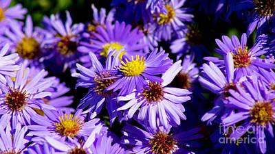 Beastie Boys - Autumn Flowers by Joe Geraci