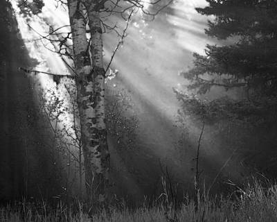 Autumn Fog With Sun Rays Bw Art Print by Theresa Tahara